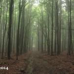 PF 2014 český les
